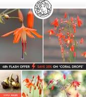 25% off Bessera Elegans (Coral Drops)