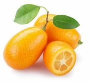 Kumquat: Baby Tangerines - Eat Them as You Pick from the Tree
