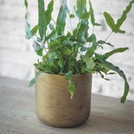 Stratton Plant Pot Cement