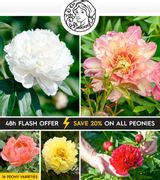 save 20% on All Bare-Root Peonies!