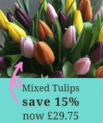 15% off Colourful Tulips