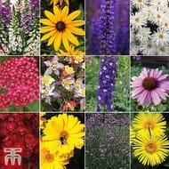 72 Perennial Plug Plants - 6 of Each Variety