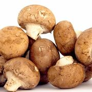 Mushroom Windowsill Kits - Any 3 for £30(Wide Choice of Delicious Types)