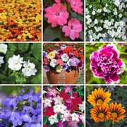 Bumper Garden Collection 72 Plug Plants - £9.99 from Suttons Seeds (Free P&P)