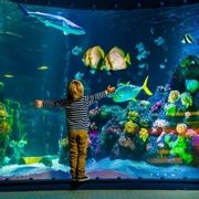 SEA LIFE Single Person Pass - Only £6.37!