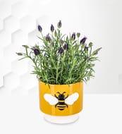 Lavender Bee Planter plus Free Chocolates
