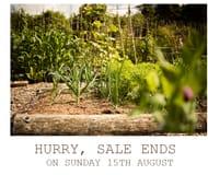 Rocket Gardens Summer Sale
