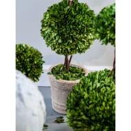 Faux Boxwood Tree