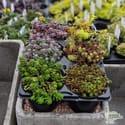 Plant undefineds